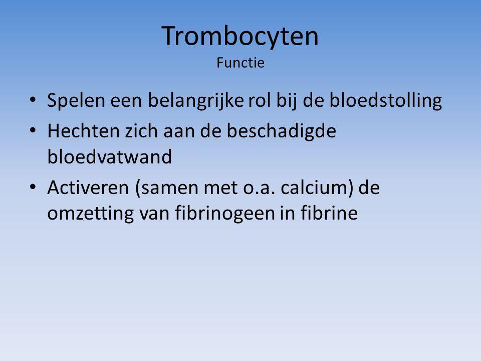 Trombocyten Functie Spelen een belangrijke rol bij de bloedstolling Hechten zich aan de beschadigde bloedvatwand Activeren (samen met o.a. calcium) de