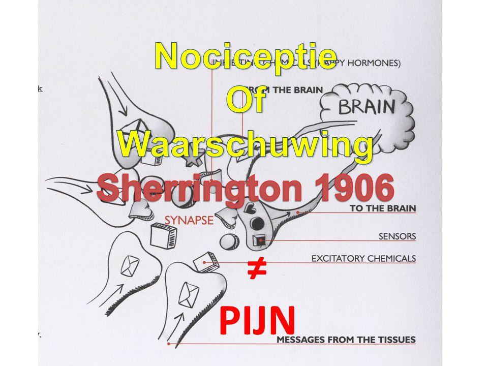 Pijn-neuromatrix