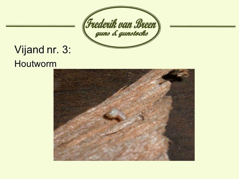 Vijand nr. 3: Houtworm
