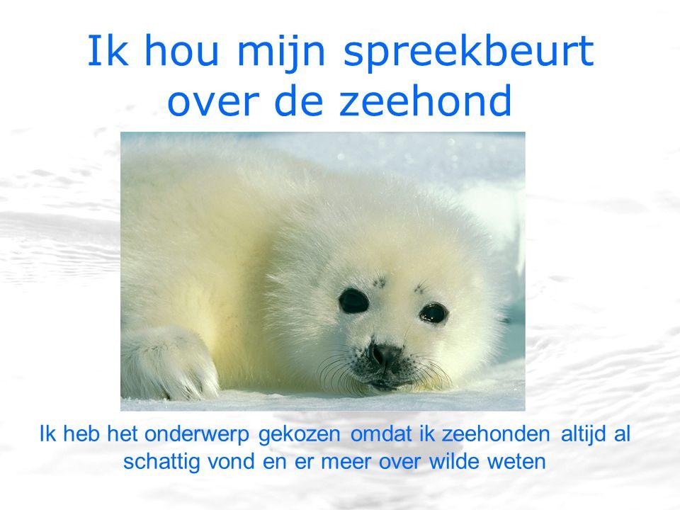 Ik hou mijn spreekbeurt over de zeehond Ik heb het onderwerp gekozen omdat ik zeehonden altijd al schattig vond en er meer over wilde weten