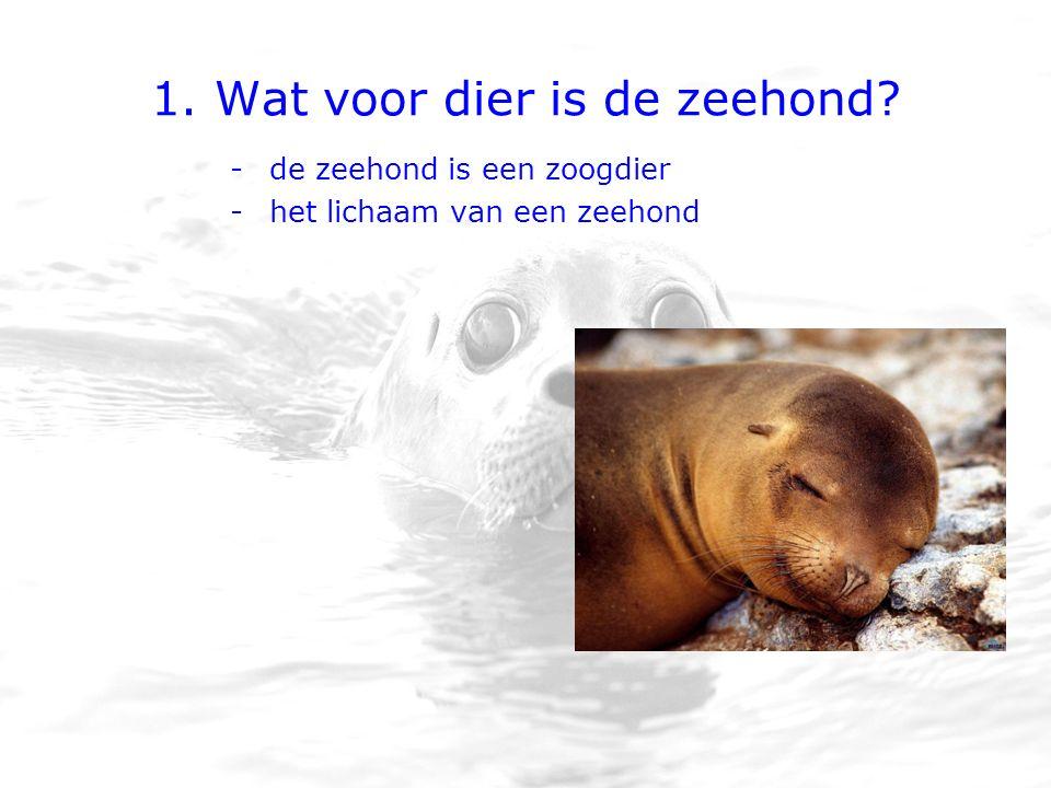 1. Wat voor dier is de zeehond? -de zeehond is een zoogdier -het lichaam van een zeehond
