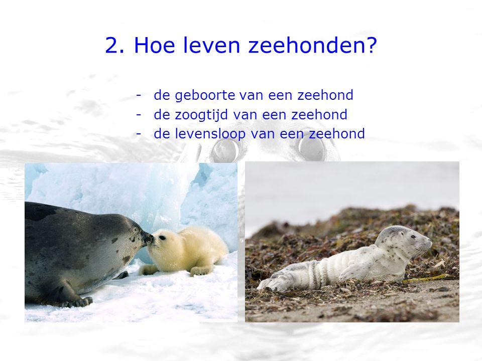 2. Hoe leven zeehonden.