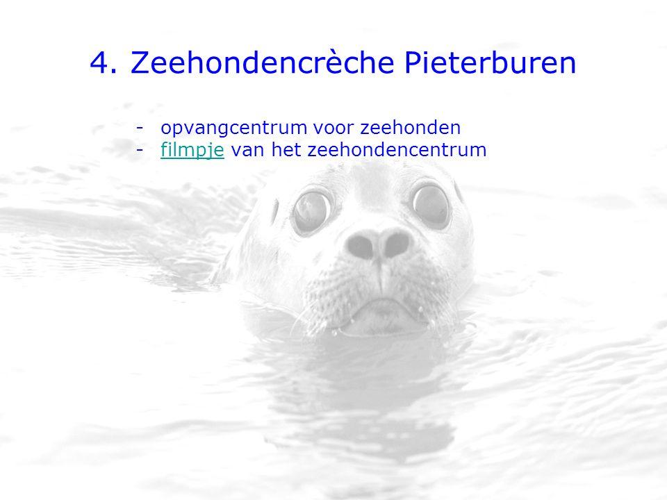4. Zeehondencrèche Pieterburen -opvangcentrum voor zeehonden -filmpje van het zeehondencentrumfilmpje