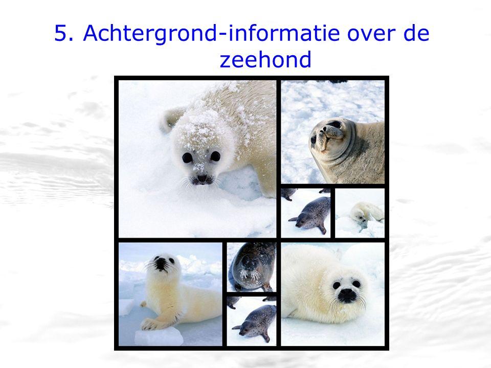 5. Achtergrond-informatie over de zeehond