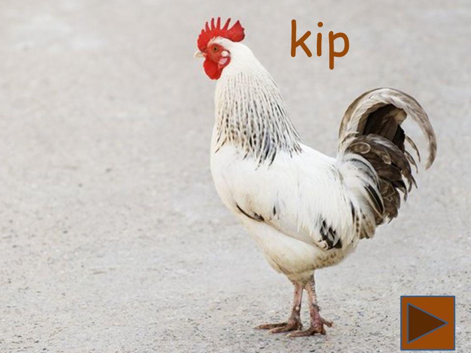 Konijn begint met de letter k. Zie jij nog een woord dat begint met de letter k.