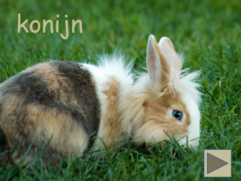 Konijn begint met de letter k. Zie jij het woord konijn? konijn appelbooom boom ster vis konijn