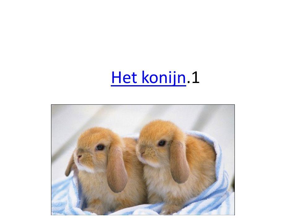 Het konijnHet konijn.1