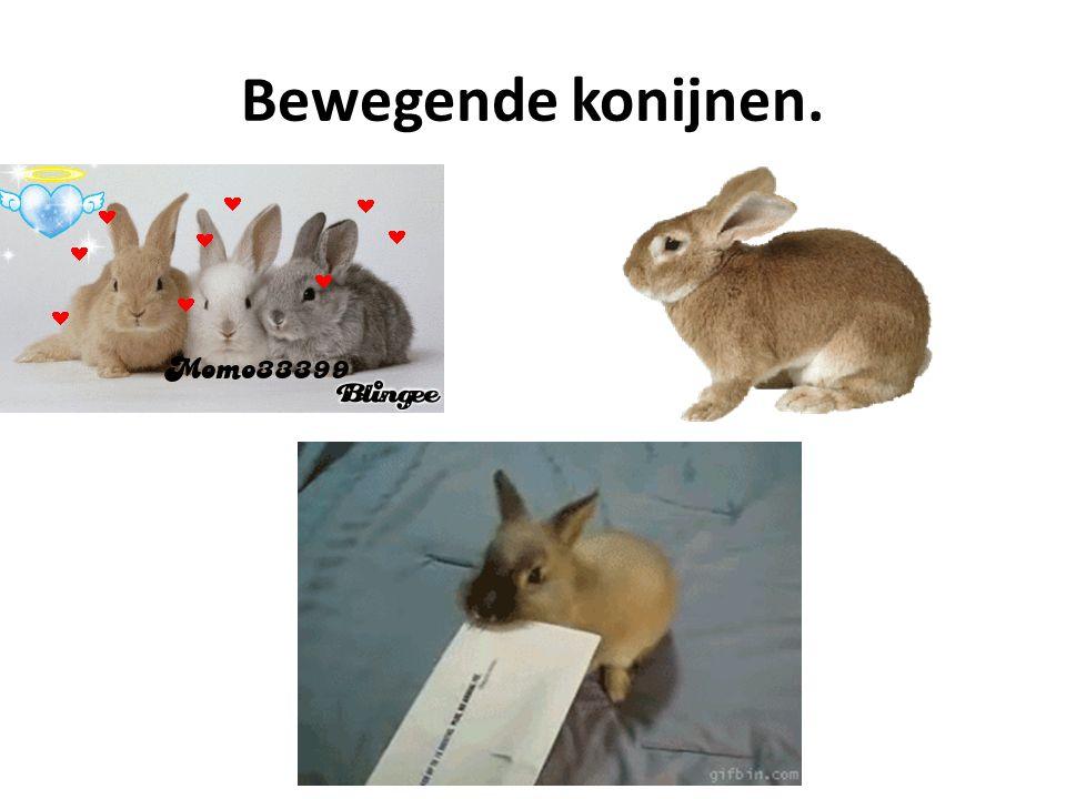 Bewegende konijnen.