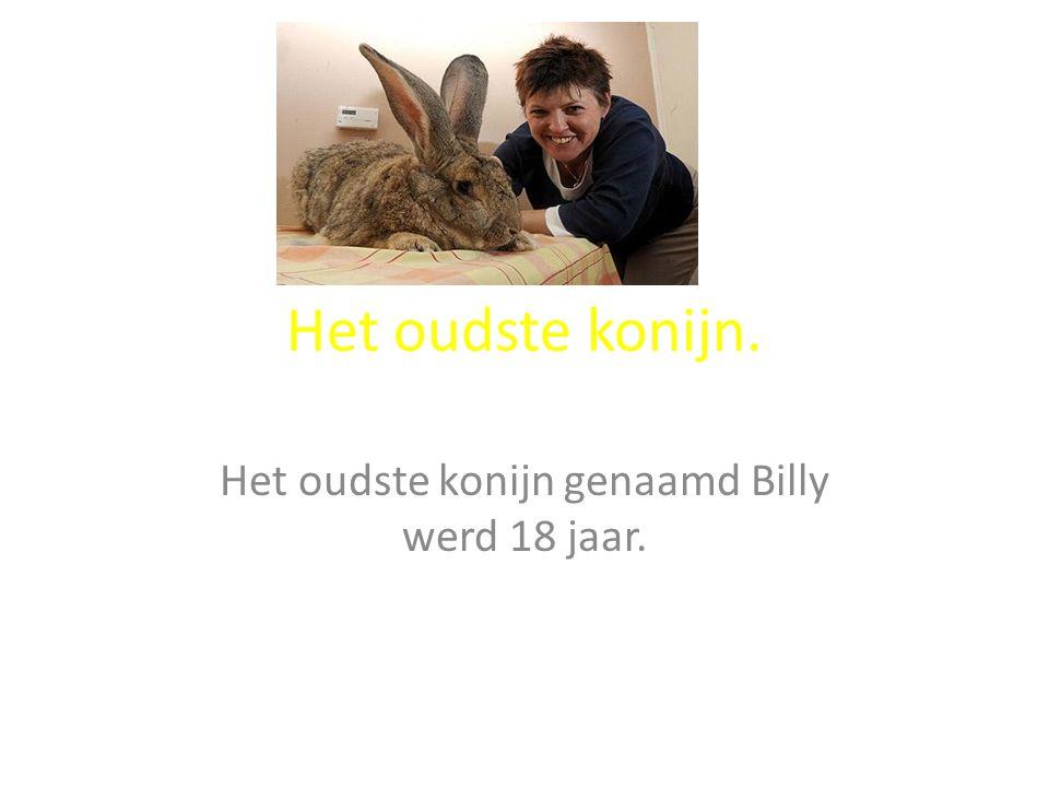Het oudste konijn. Het oudste konijn genaamd Billy werd 18 jaar.