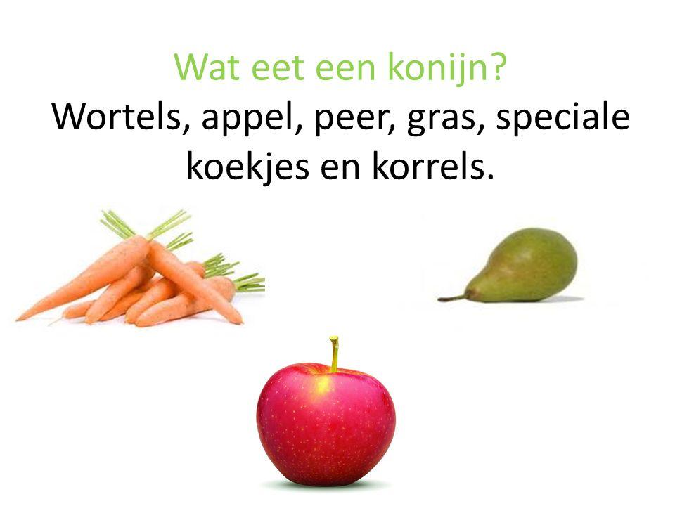 Wat eet een konijn Wortels, appel, peer, gras, speciale koekjes en korrels.