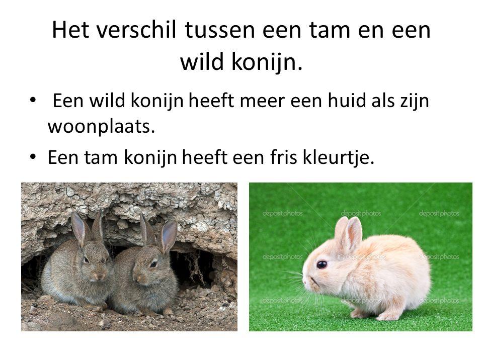 Het verschil tussen een tam en een wild konijn. Een wild konijn heeft meer een huid als zijn woonplaats. Een tam konijn heeft een fris kleurtje.