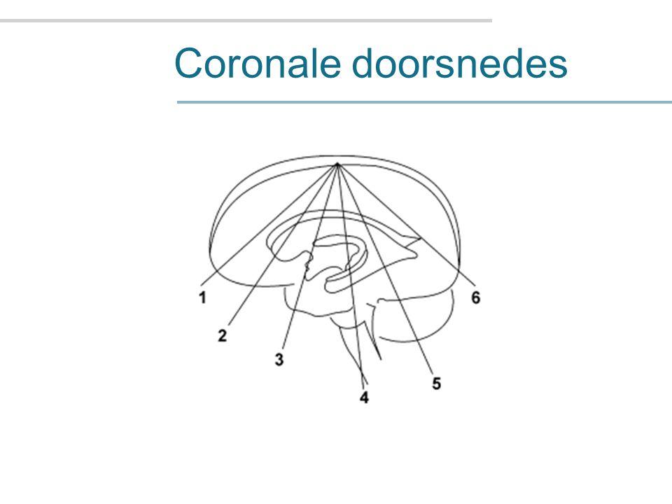 Doorsnede 1: Frontale lobben