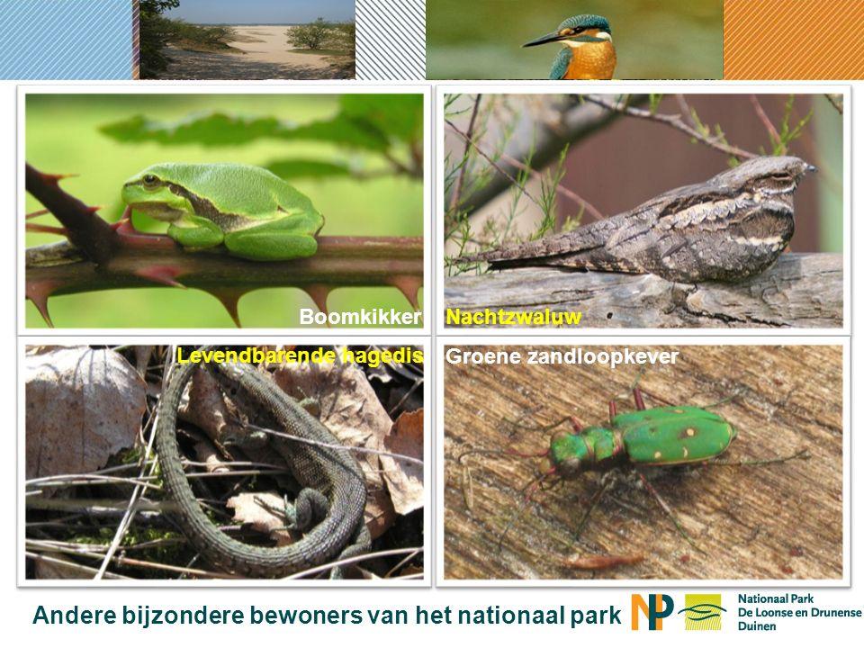Andere bijzondere bewoners van het nationaal park BoomkikkerNachtzwaluw Levendbarende hagedis Groene zandloopkever