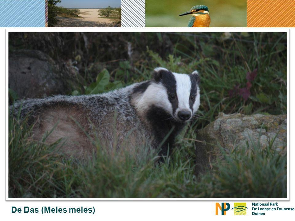 Gebruik van 'snelwegen voor dieren' in Brabant