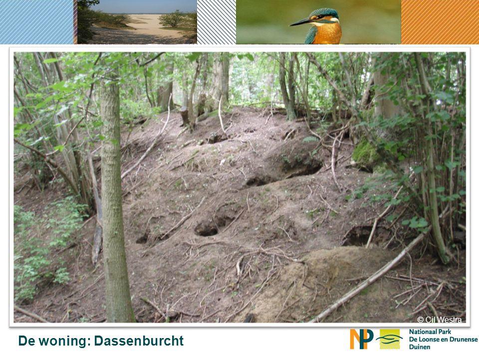 2011 Verspreiding van de Das in Brabant verspreiding das
