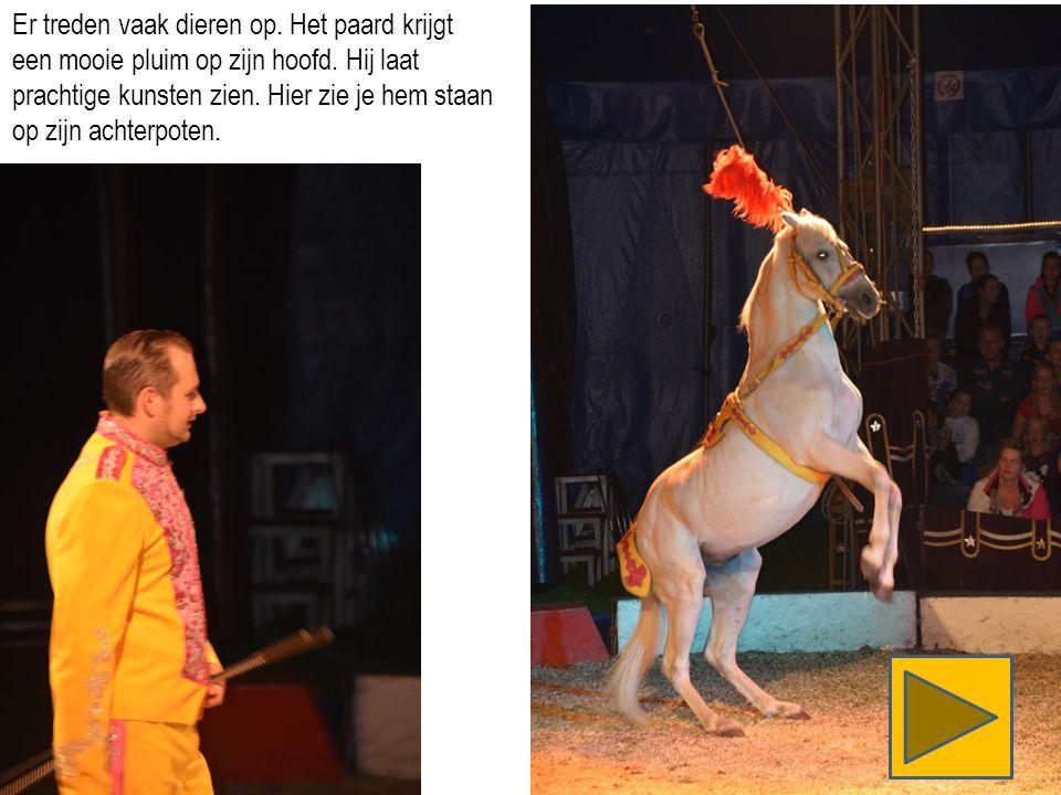 Er treden vaak dieren op. Het paard krijgt een mooie pluim op zijn hoofd.