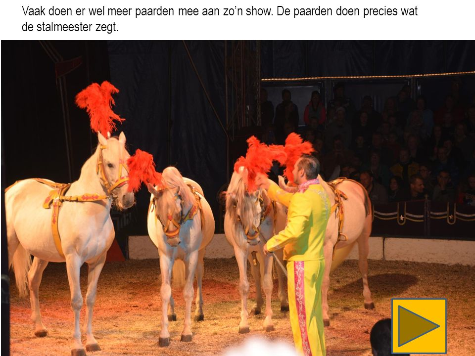 Vaak doen er wel meer paarden mee aan zo'n show. De paarden doen precies wat de stalmeester zegt.