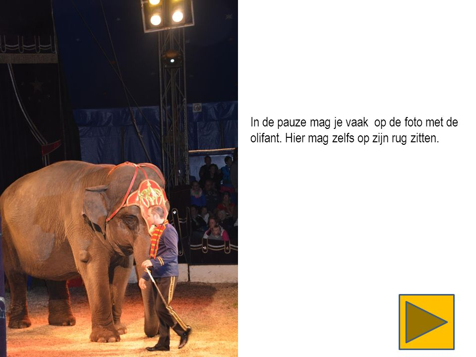 In de pauze mag je vaak op de foto met de olifant. Hier mag zelfs op zijn rug zitten.