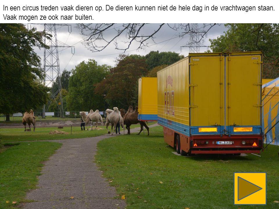 In een circus treden vaak dieren op. De dieren kunnen niet de hele dag in de vrachtwagen staan.