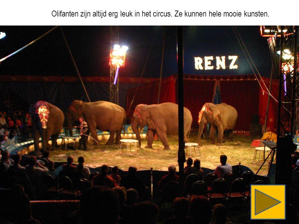 Olifanten zijn altijd erg leuk in het circus. Ze kunnen hele mooie kunsten.