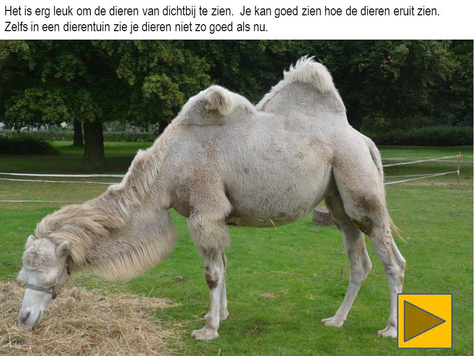 Dit paard verdient een groot applaus.