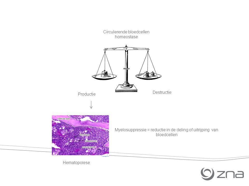Hematopoïese Myelosuppressie = reductie in de deling of uitrijping van bloedcellen Circulerende bloedcellen homeostase Productie Destructie