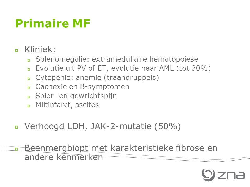 Primaire MF Kliniek: Splenomegalie: extramedullaire hematopoiese Evolutie uit PV of ET, evolutie naar AML (tot 30%) Cytopenie: anemie (traandruppels) Cachexie en B-symptomen Spier- en gewrichtspijn Miltinfarct, ascites Verhoogd LDH, JAK-2-mutatie (50%) Beenmergbiopt met karakteristieke fibrose en andere kenmerken