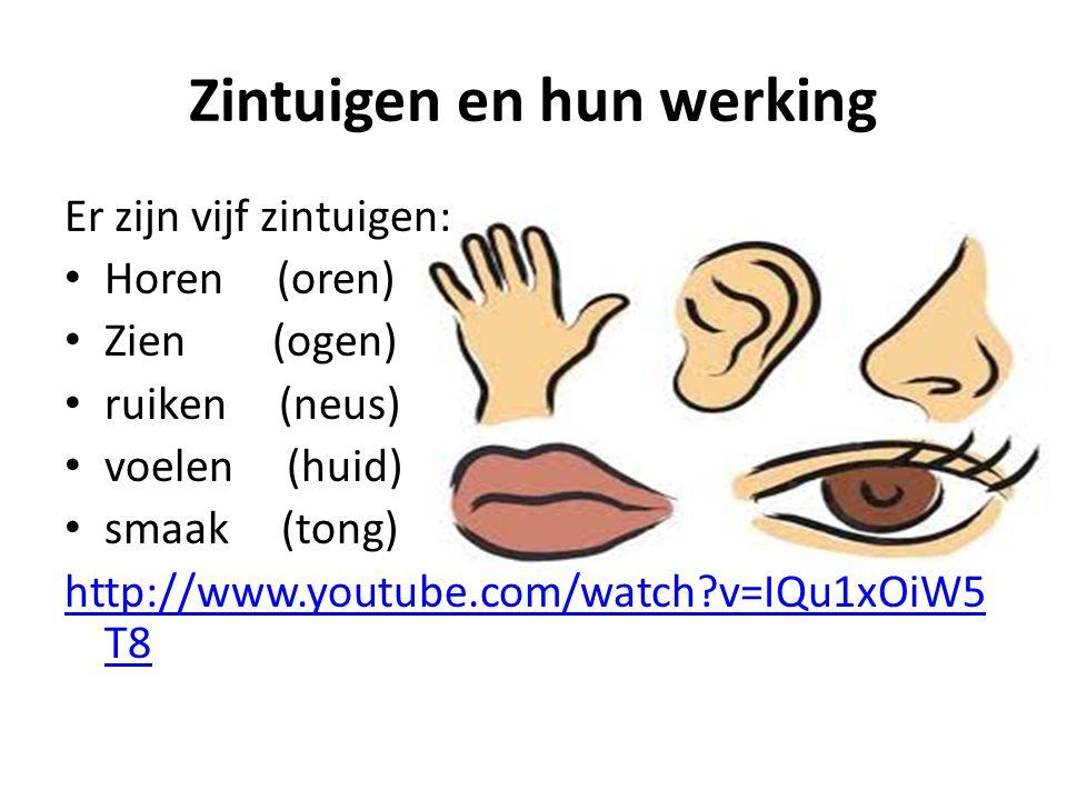Zintuigen en hun werking Er zijn vijf zintuigen: Horen (oren) Zien (ogen) ruiken (neus) voelen (huid) smaak (tong) http://www.youtube.com/watch?v=IQu1