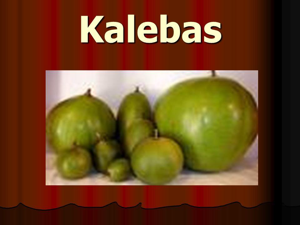 Kalebas