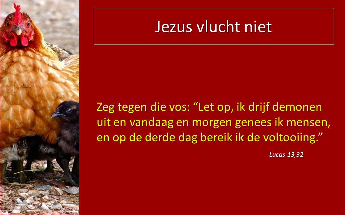 Jezus vlucht niet Zeg tegen die vos: Let op, ik drijf demonen uit en vandaag en morgen genees ik mensen, en op de derde dag bereik ik de voltooiing. Lucas 13,32