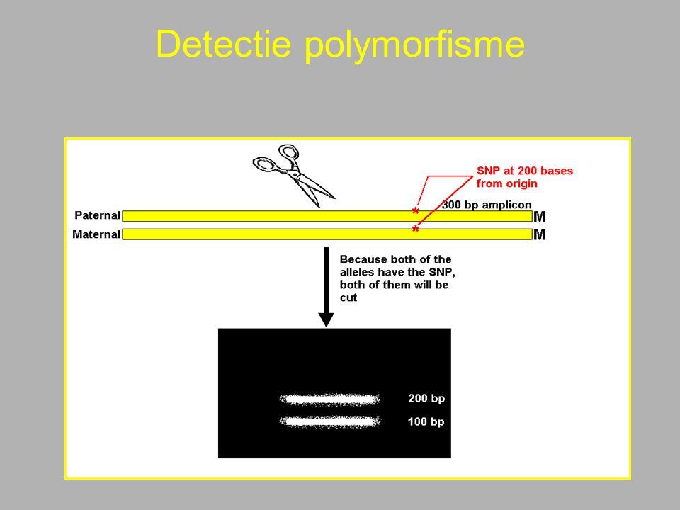 Detectie polymorfisme
