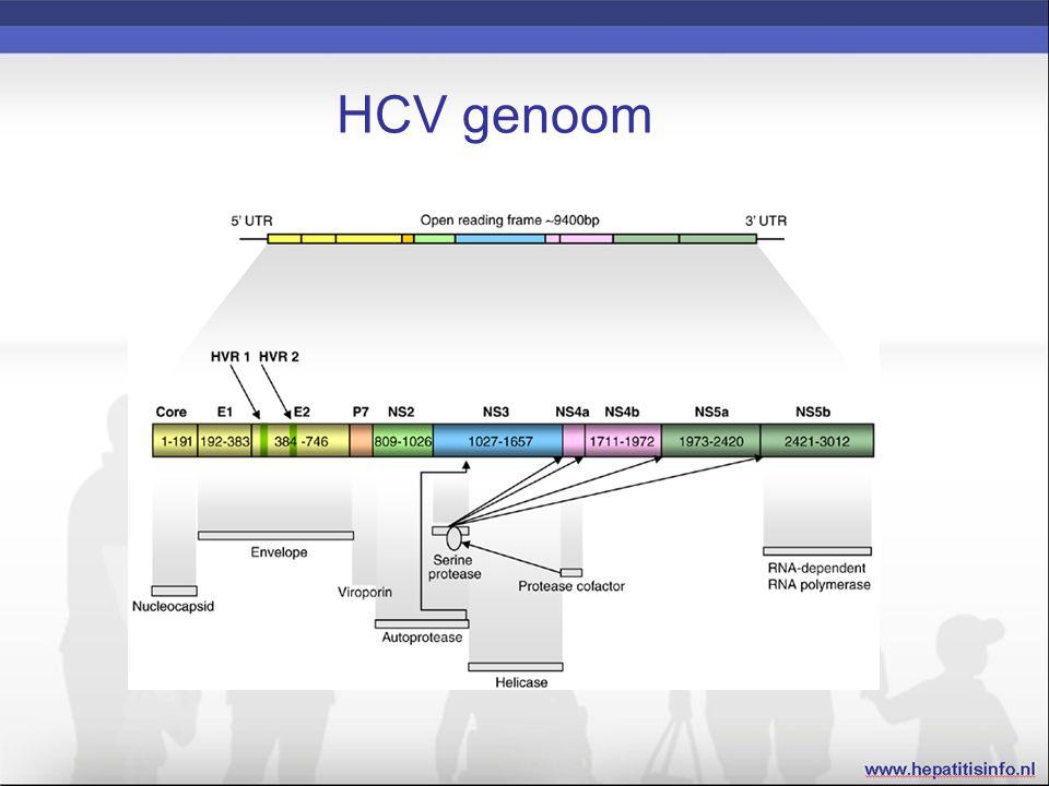 HCV genoom