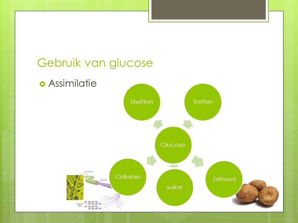 Gebruik van glucose  Assimilatie Glucose EiwittenVettenZetmeelsuikerCellulose