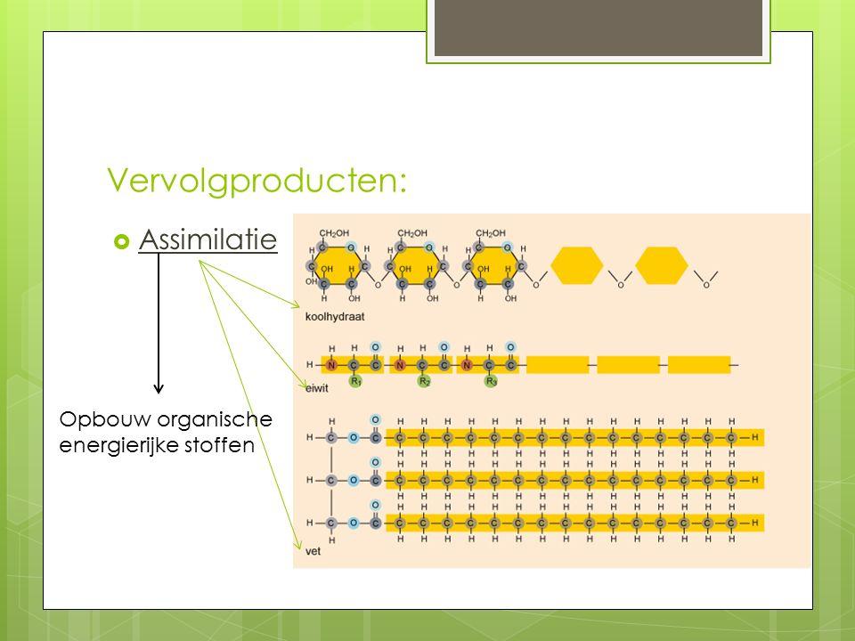 Vervolgproducten:  Assimilatie Opbouw organische energierijke stoffen
