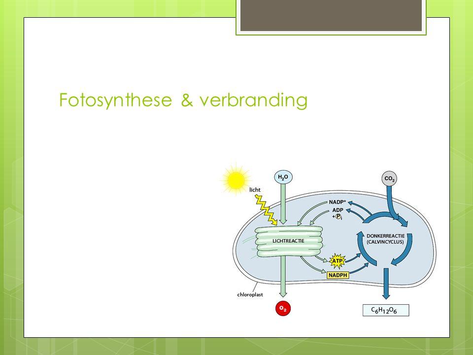 Fotosynthese & verbranding