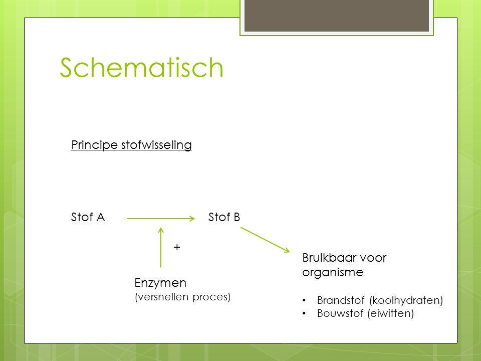 Schematisch Principe stofwisseling Stof A Stof B Enzymen (versnellen proces) + Bruikbaar voor organisme Brandstof (koolhydraten) Bouwstof (eiwitten)