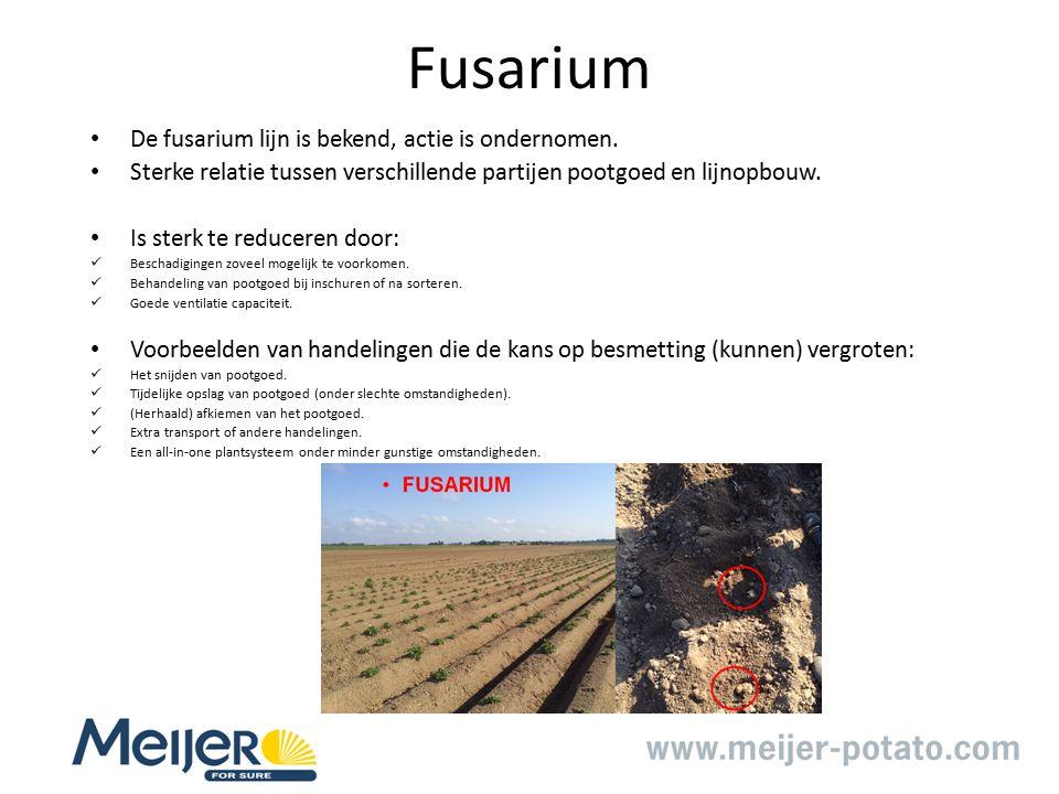 Fusarium De fusarium lijn is bekend, actie is ondernomen.