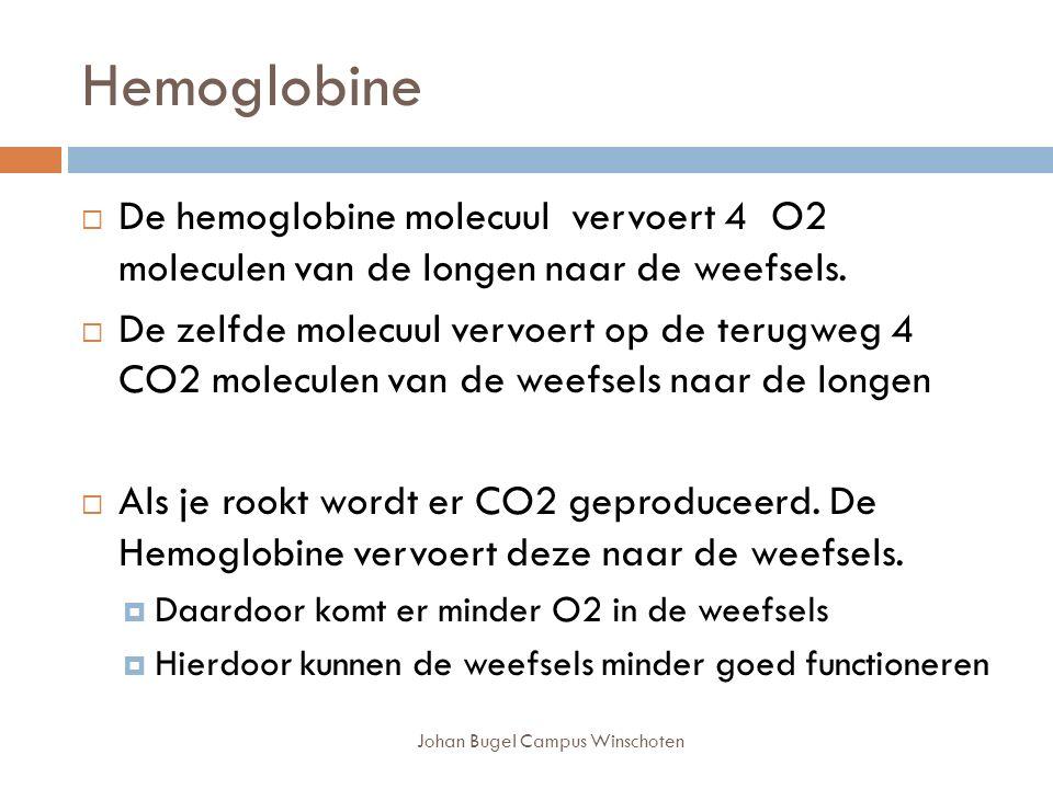 Hemoglobine Johan Bugel Campus Winschoten  De hemoglobine molecuul vervoert 4 O2 moleculen van de longen naar de weefsels.