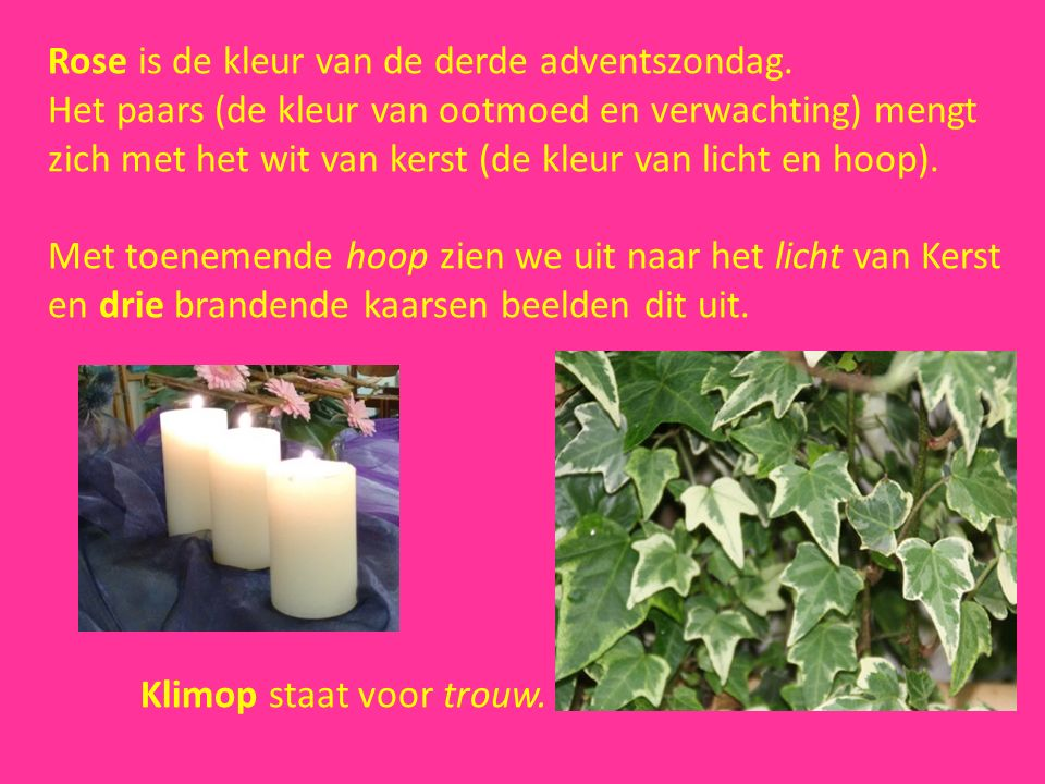 Rose is de kleur van de derde adventszondag.