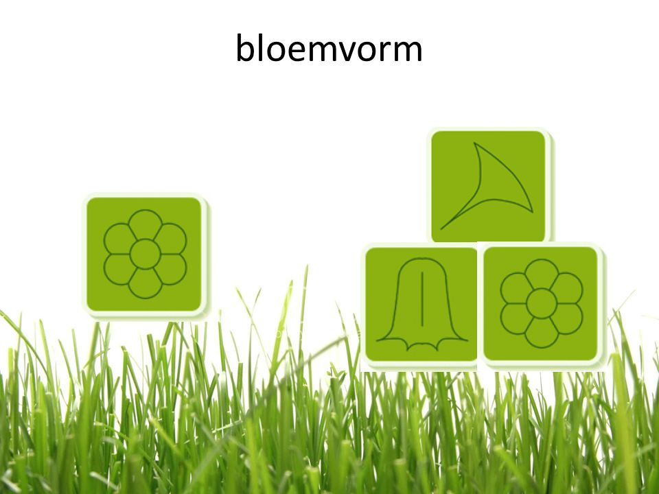 bloemvorm