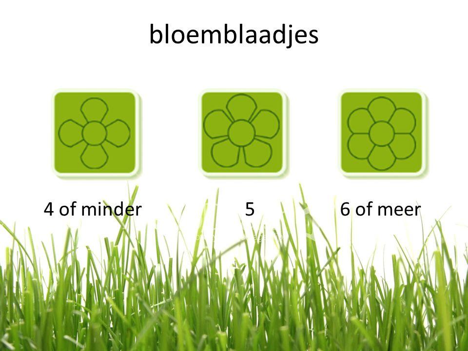 bloemblaadjes 4 of minder56 of meer