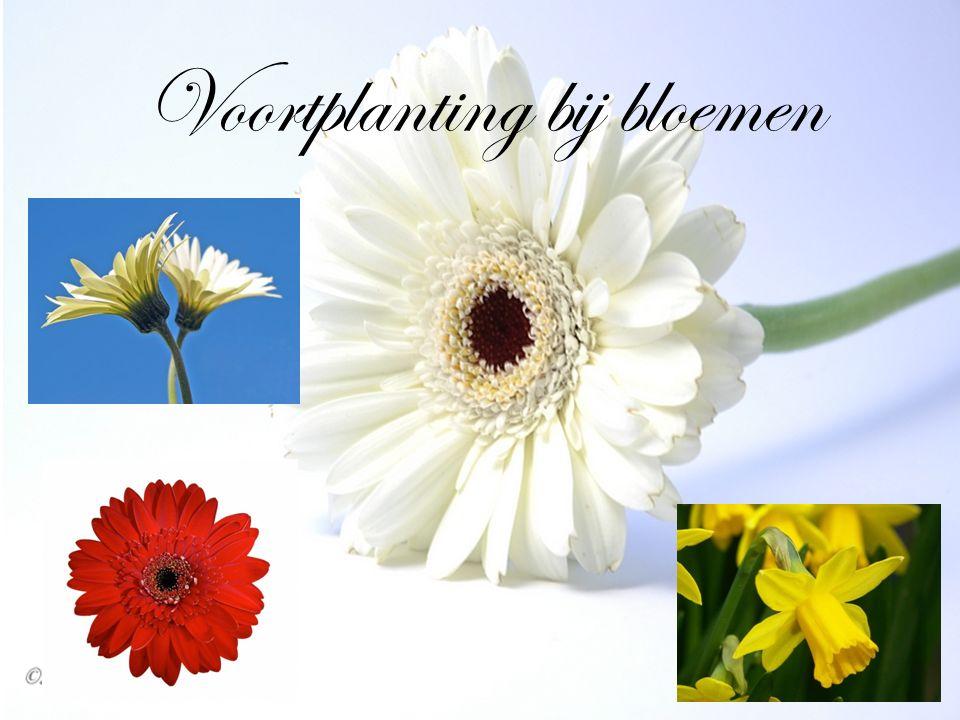 De binnenkant van een bloem Vanaf het voorjaar komen allerlei planten in bloei.