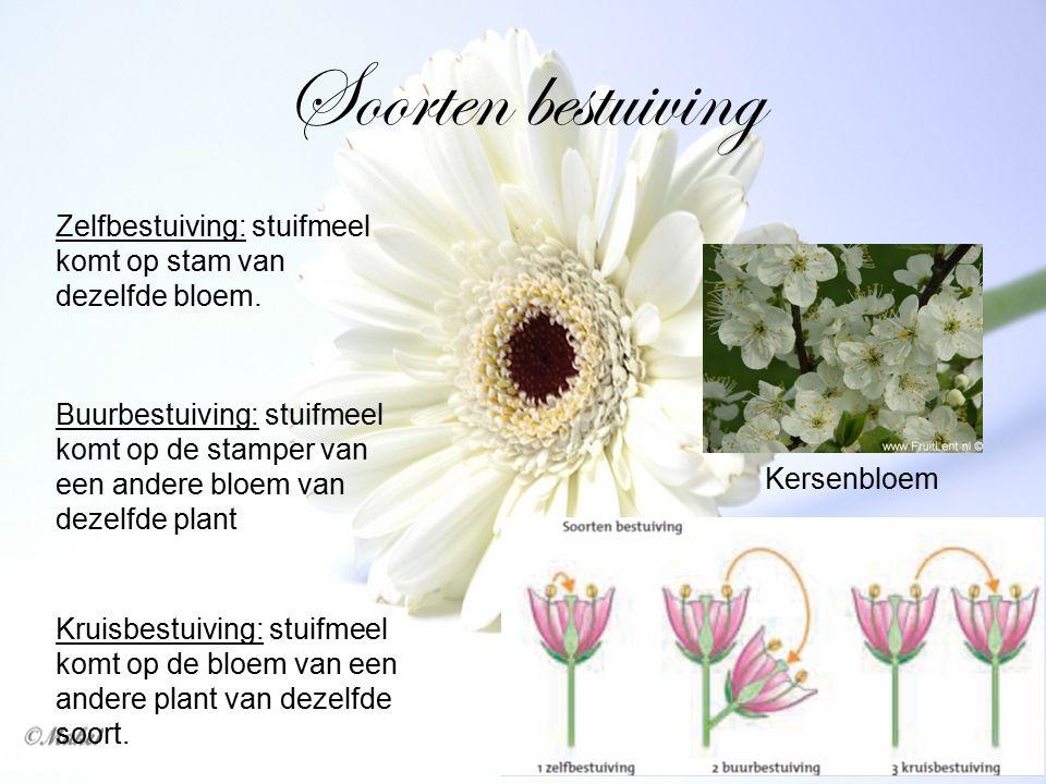 Soorten bestuiving Zelfbestuiving: stuifmeel komt op stam van dezelfde bloem. Buurbestuiving: stuifmeel komt op de stamper van een andere bloem van de