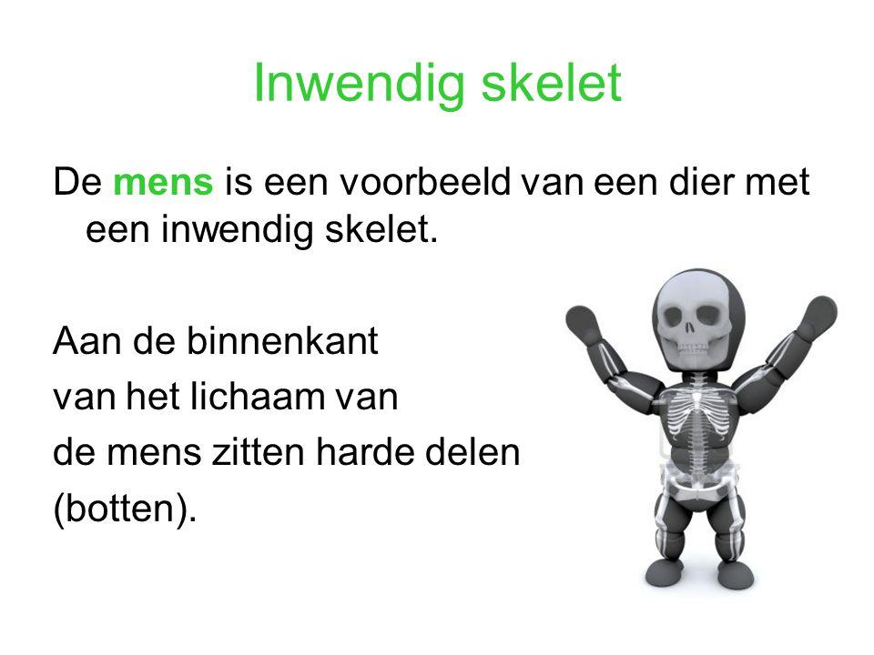 Inwendig skelet De mens is een voorbeeld van een dier met een inwendig skelet. Aan de binnenkant van het lichaam van de mens zitten harde delen (botte