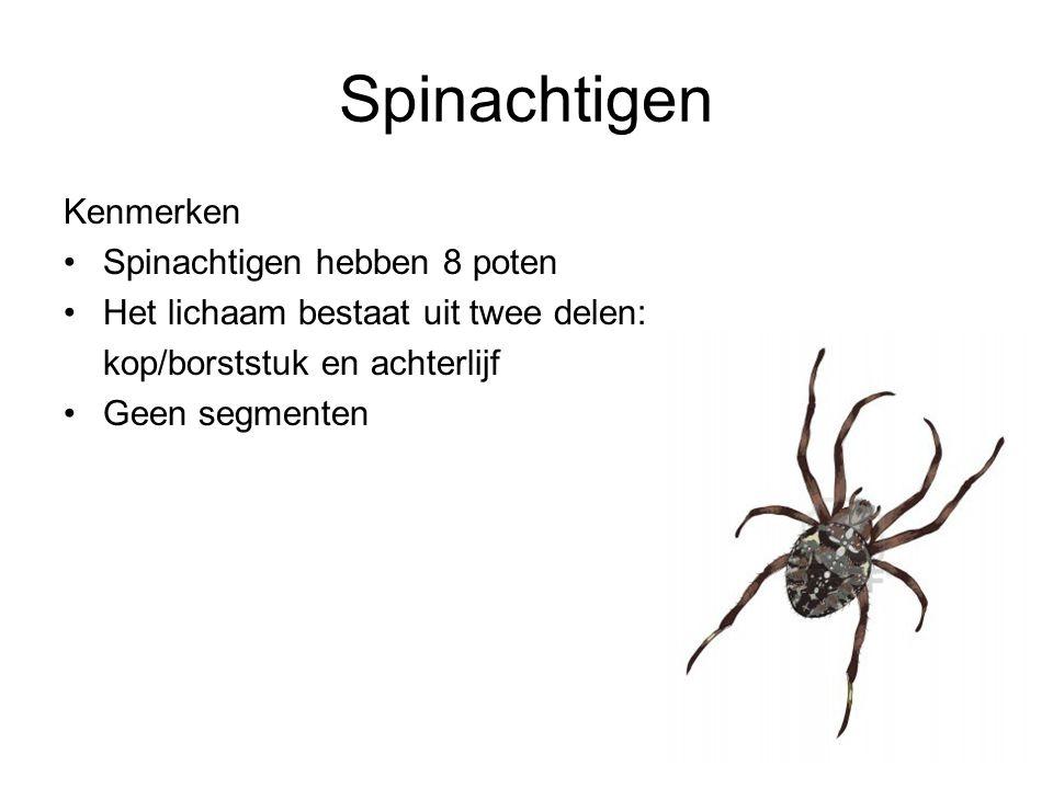 Spinachtigen Kenmerken Spinachtigen hebben 8 poten Het lichaam bestaat uit twee delen: kop/borststuk en achterlijf Geen segmenten