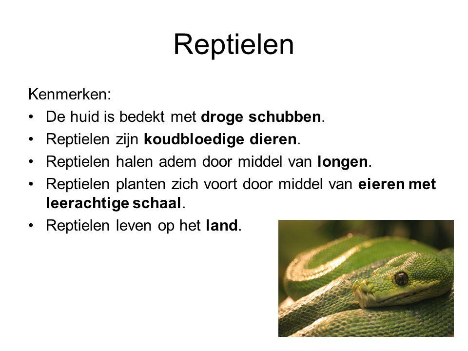 Reptielen Kenmerken: De huid is bedekt met droge schubben. Reptielen zijn koudbloedige dieren. Reptielen halen adem door middel van longen. Reptielen