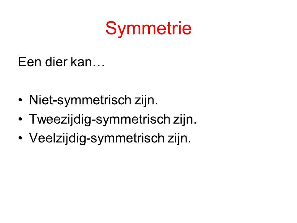 Symmetrie Een dier kan… Niet-symmetrisch zijn. Tweezijdig-symmetrisch zijn. Veelzijdig-symmetrisch zijn.