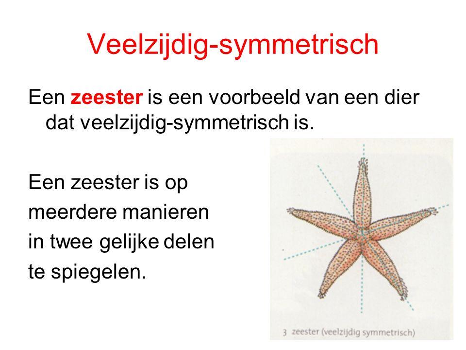 Veelzijdig-symmetrisch Een zeester is een voorbeeld van een dier dat veelzijdig-symmetrisch is. Een zeester is op meerdere manieren in twee gelijke de