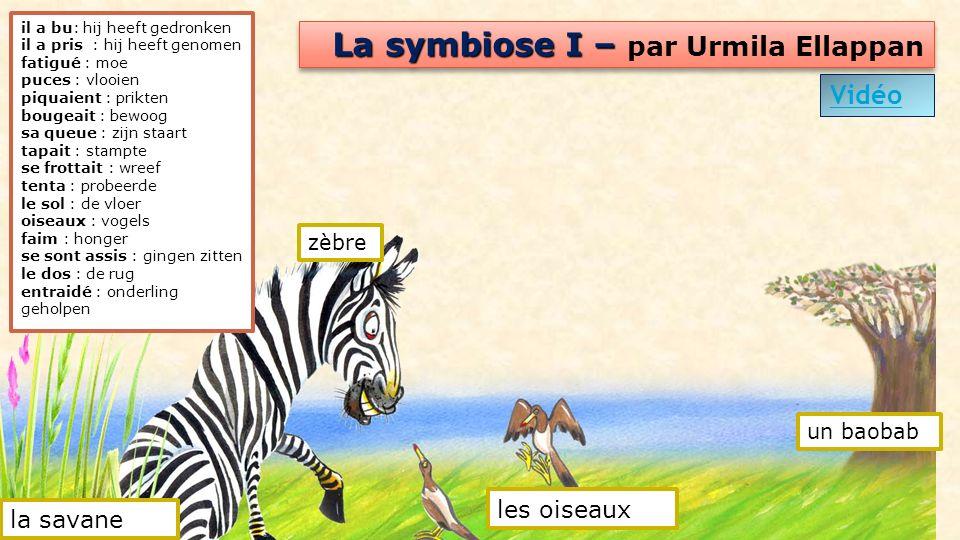 La symbiose I – La symbiose I – par Urmila Ellappan Vidéo il a bu: hij heeft gedronken il a pris : hij heeft genomen fatigué : moe puces : vlooien piq