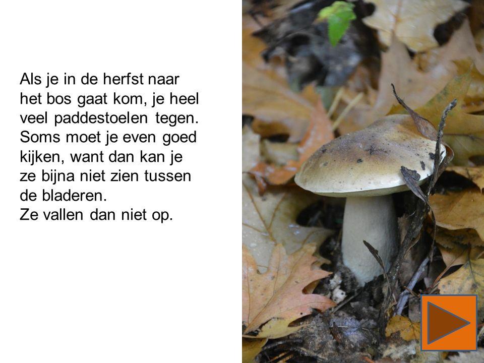 Als je in de herfst naar het bos gaat kom, je heel veel paddestoelen tegen. Soms moet je even goed kijken, want dan kan je ze bijna niet zien tussen d
